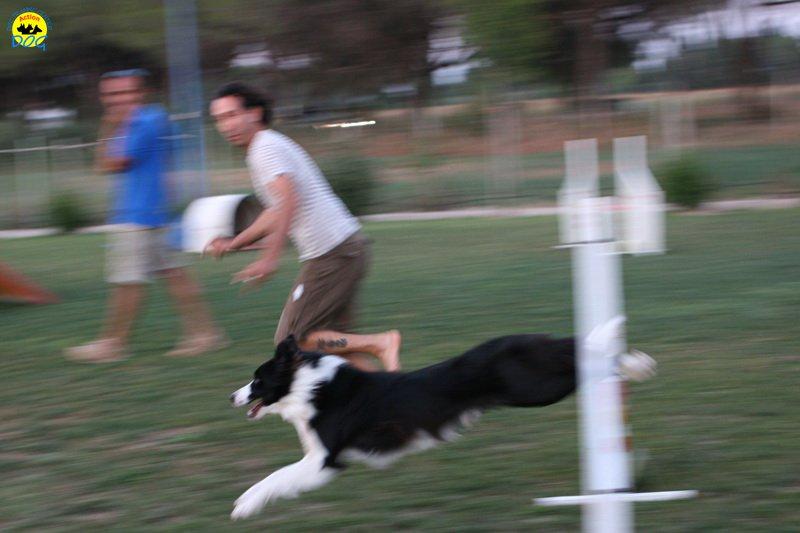 actiondog-020808-18.jpg