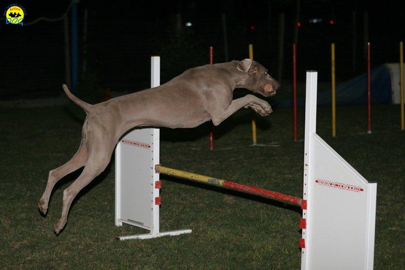 actiondog-020808-29.jpg