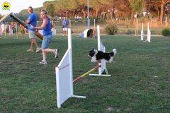 actiondog-020808-04.jpg