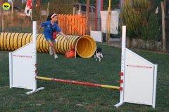actiondog-020808-08.jpg