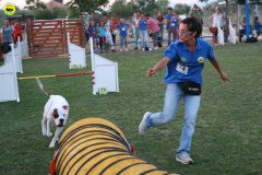 actiondog-020808-15.jpg