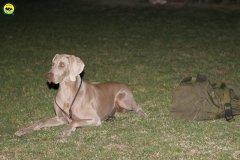 actiondog-020808-25.jpg