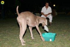actiondog-020808-27.jpg