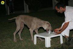 actiondog-020808-28.jpg