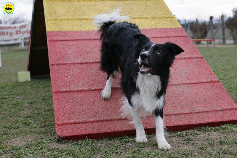 actiondog-29-01-2012-002
