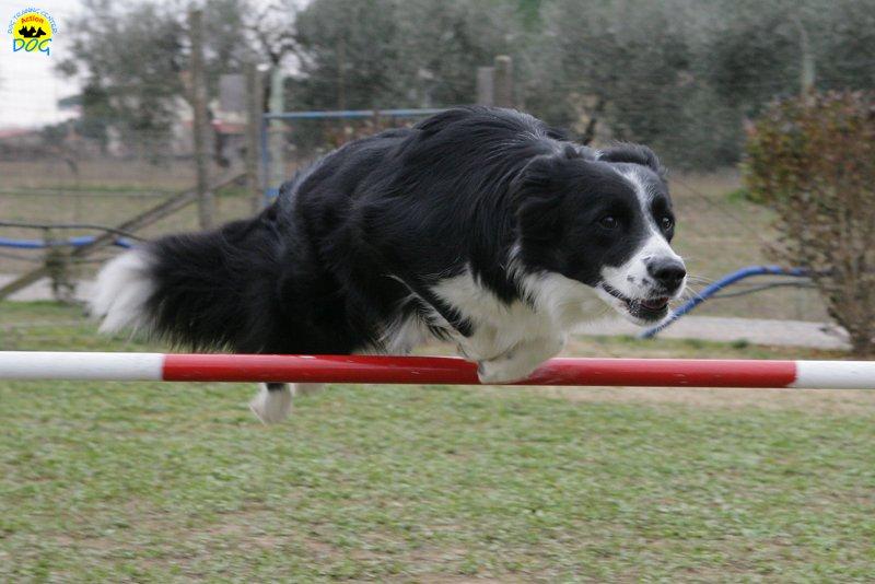 actiondog-29-01-2012-028
