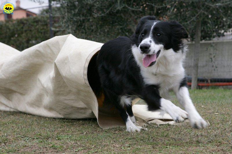 actiondog-29-01-2012-036