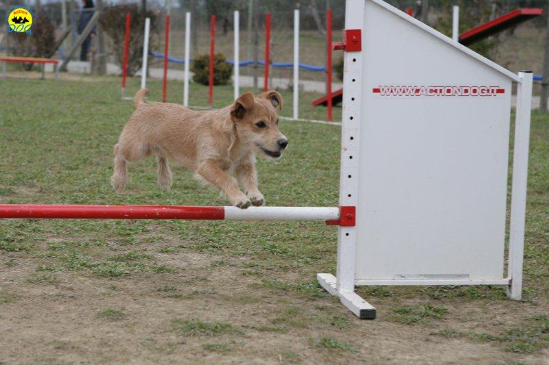 actiondog-29-01-2012-047