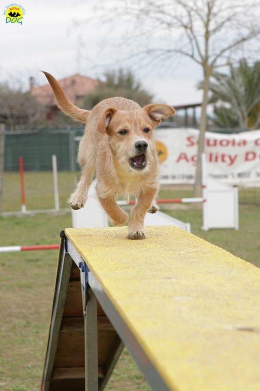 actiondog-29-01-2012-058