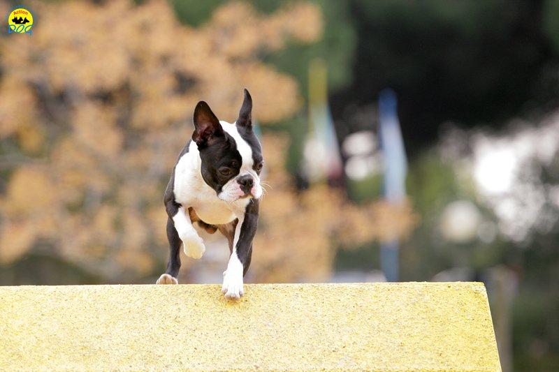 actiondog-29-01-2012-084