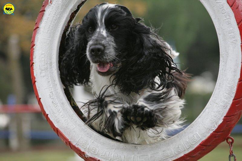 actiondog-29-01-2012-116