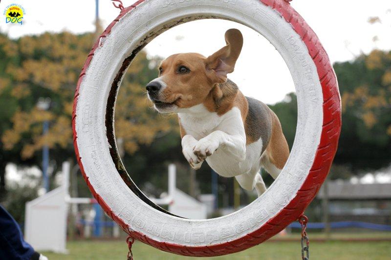 actiondog-29-01-2012-135