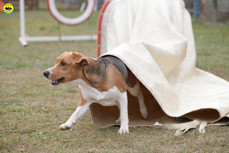 actiondog-29-01-2012-143