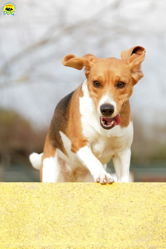 actiondog-29-01-2012-165