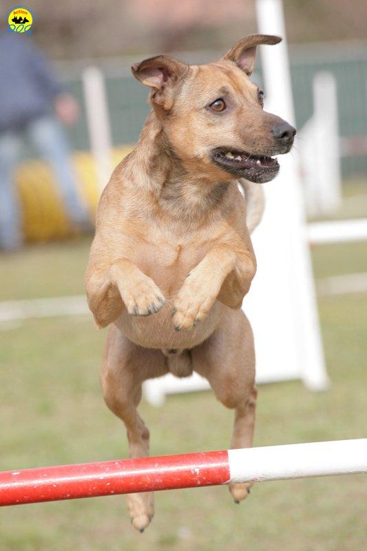 actiondog-29-01-2012-172