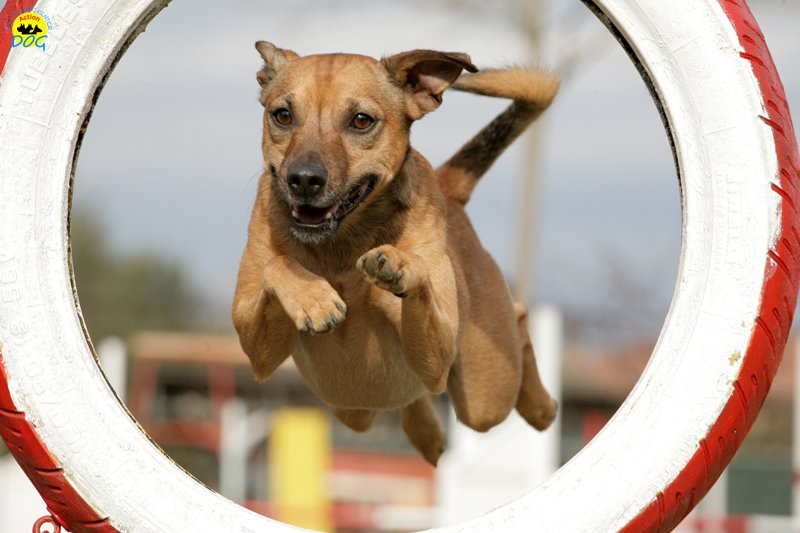 actiondog-29-01-2012-181