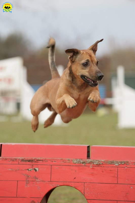 actiondog-29-01-2012-188
