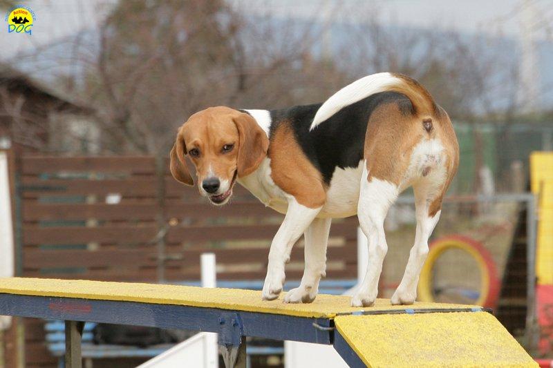 actiondog-29-01-2012-210