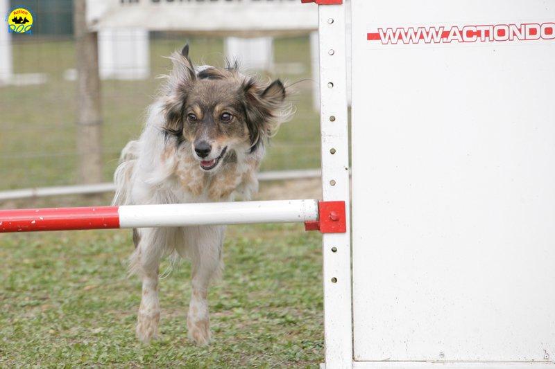 actiondog-29-01-2012-216