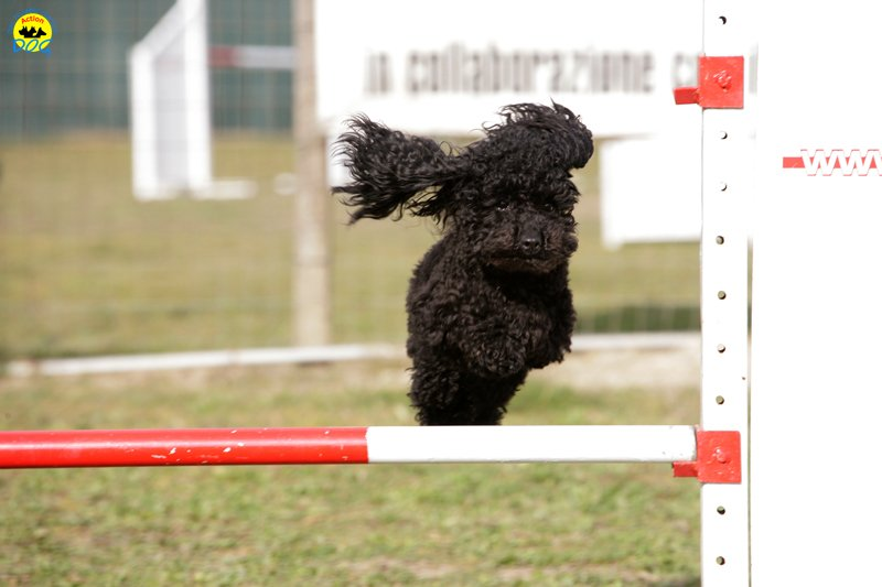 actiondog-29-01-2012-250