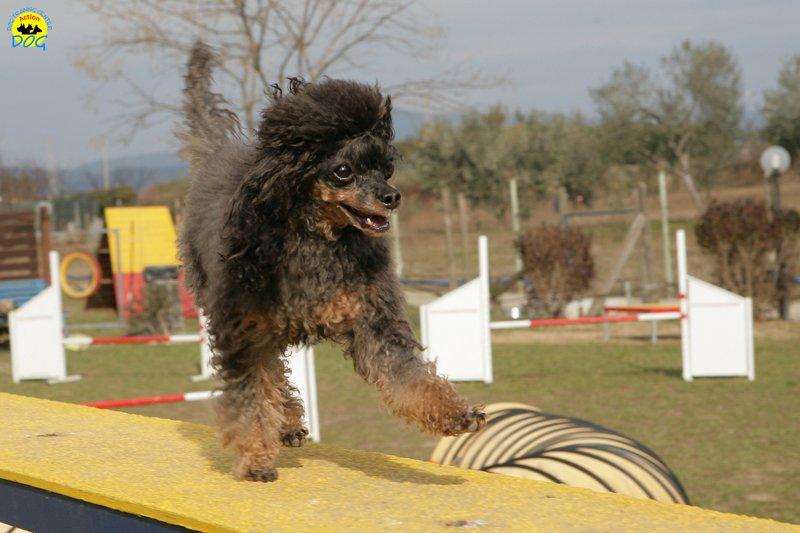 actiondog-29-01-2012-264