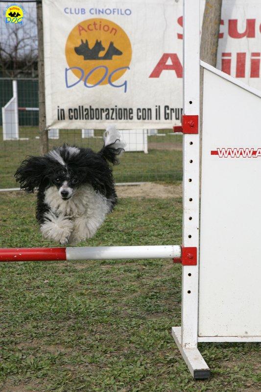 actiondog-29-01-2012-273