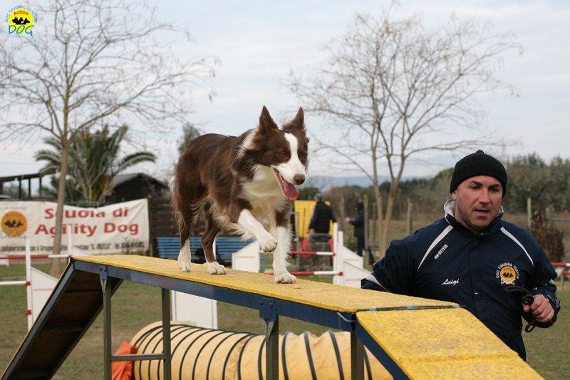 actiondog-29-01-2012-292