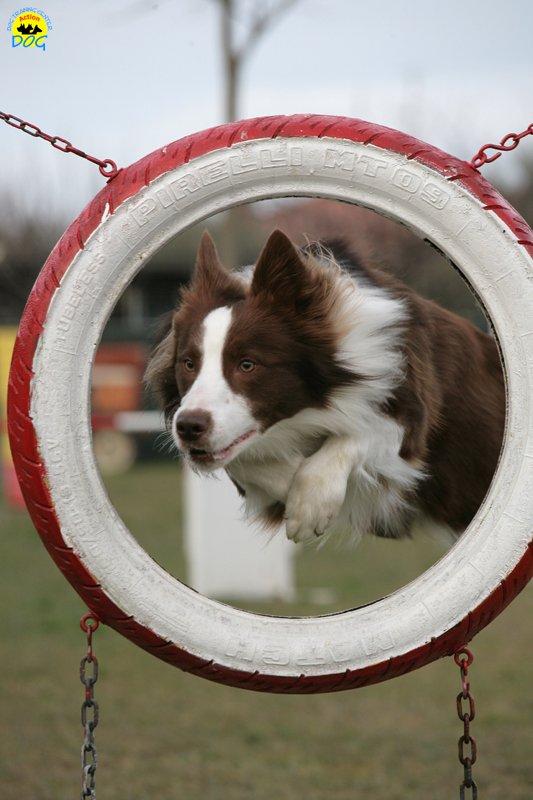 actiondog-29-01-2012-293