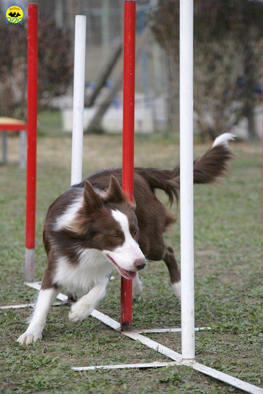 actiondog-29-01-2012-298
