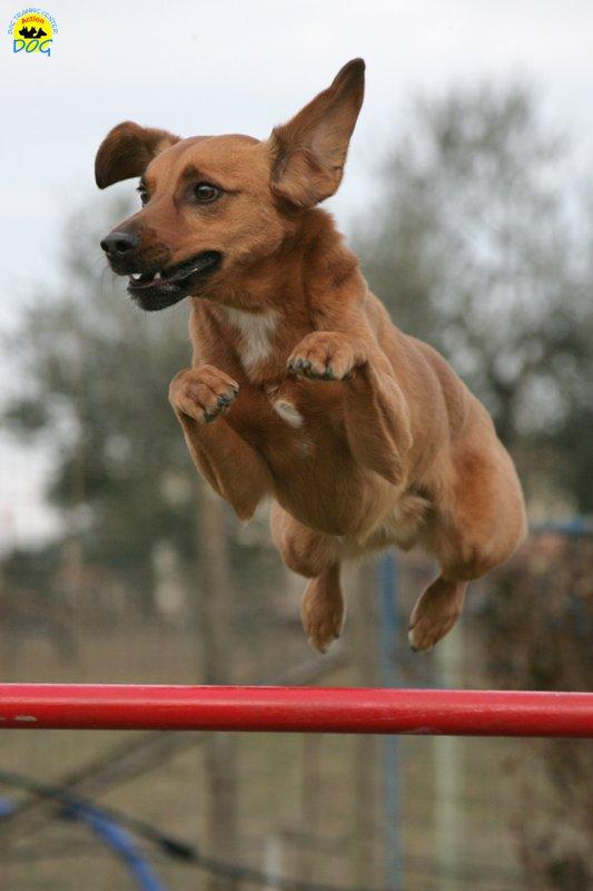 actiondog-29-01-2012-307