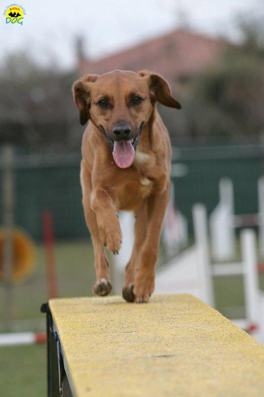 actiondog-29-01-2012-311