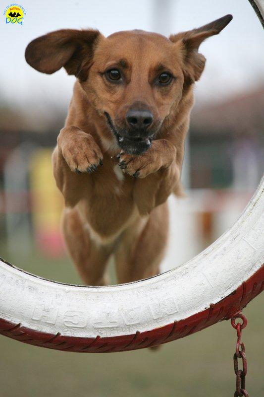 actiondog-29-01-2012-315