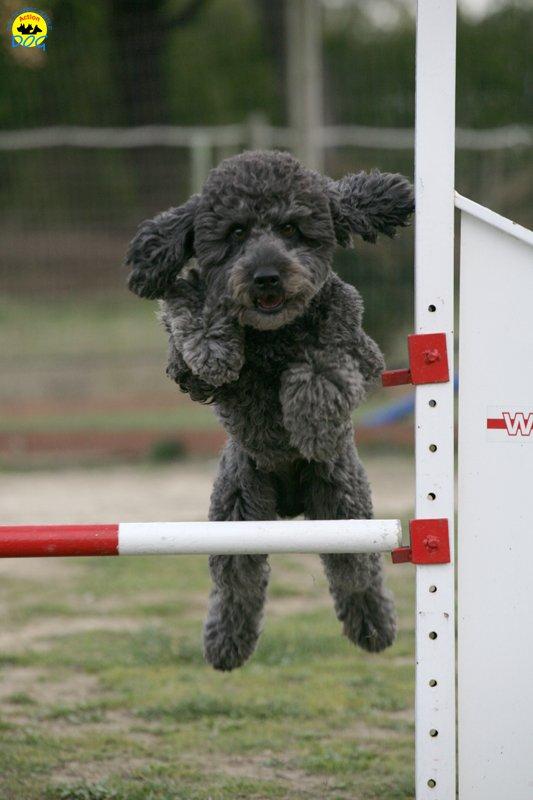 actiondog-29-01-2012-326