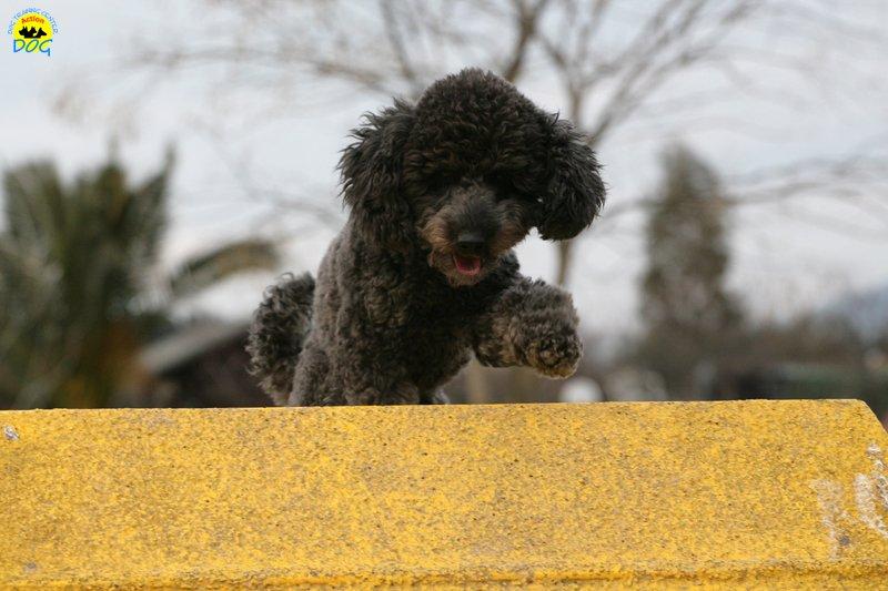 actiondog-29-01-2012-336