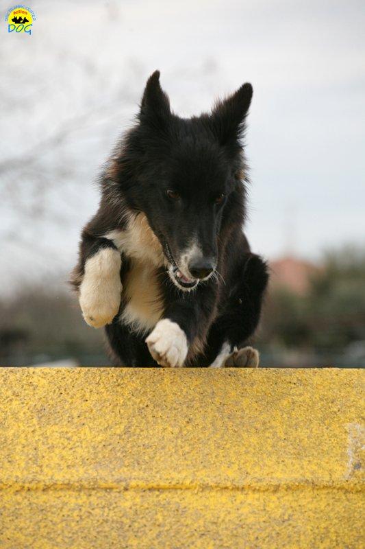 actiondog-29-01-2012-346