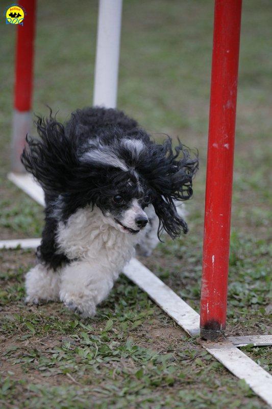 actiondog-29-01-2012-358