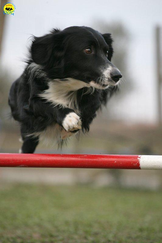 actiondog-29-01-2012-361