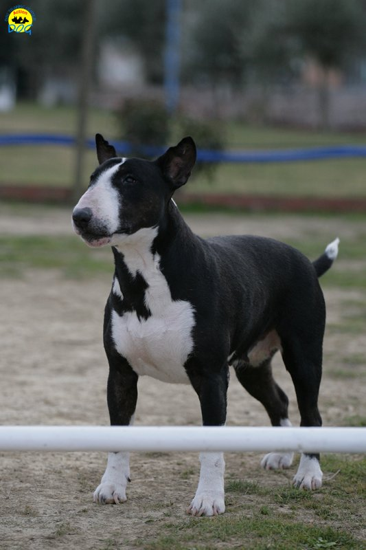 actiondog-29-01-2012-366