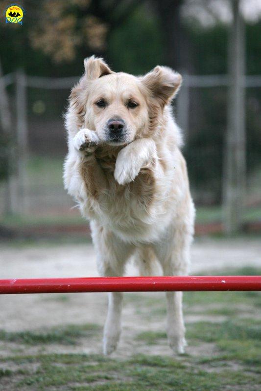 actiondog-29-01-2012-374