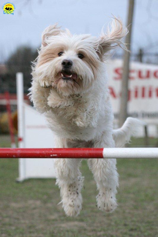 actiondog-29-01-2012-378