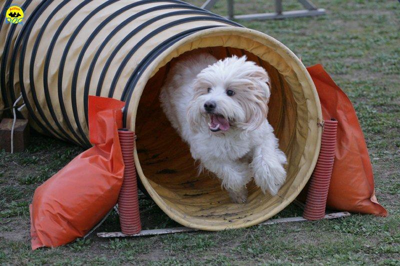 actiondog-29-01-2012-379