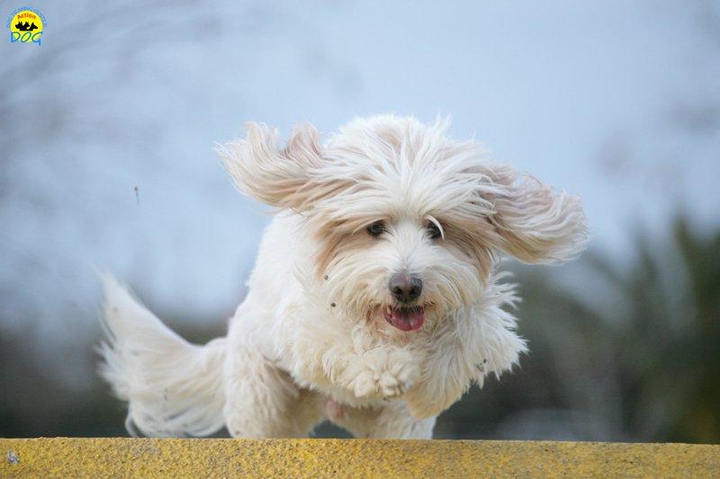 actiondog-29-01-2012-380