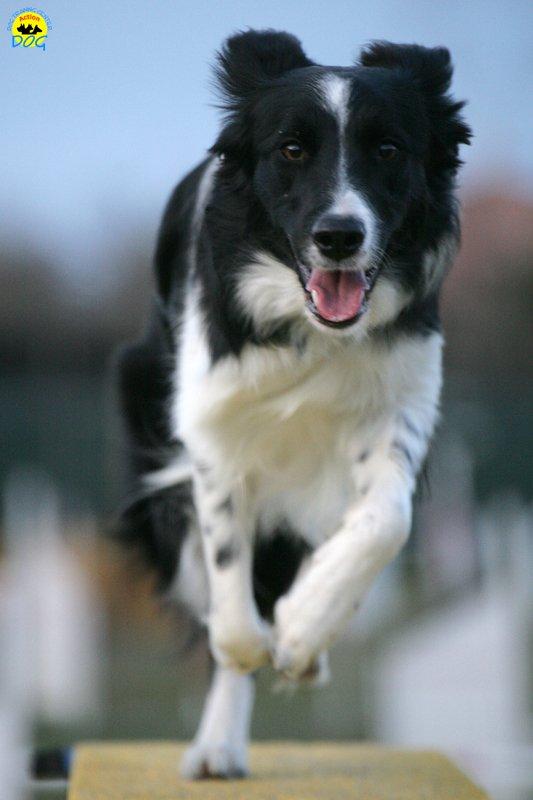 actiondog-29-01-2012-385