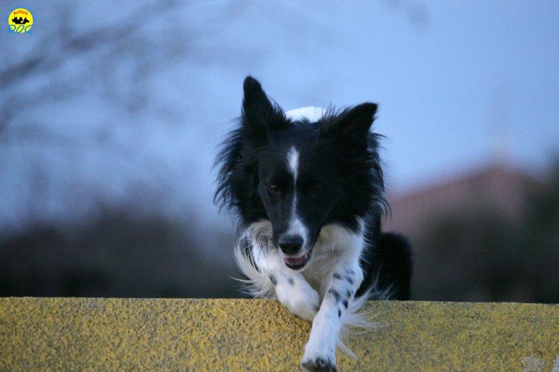 actiondog-29-01-2012-388