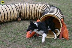 actiondog-29-01-2012-010