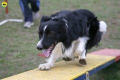 actiondog-29-01-2012-013