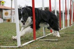 actiondog-29-01-2012-021