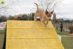 actiondog-29-01-2012-044
