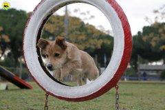actiondog-29-01-2012-051
