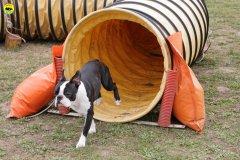 actiondog-29-01-2012-065